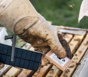 Beekeepers holding sensors